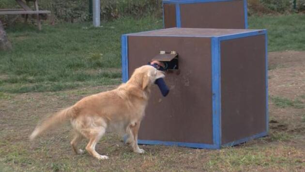Afetlerde kritik rol oynayan köpekler nasıl eğitiliyor?
