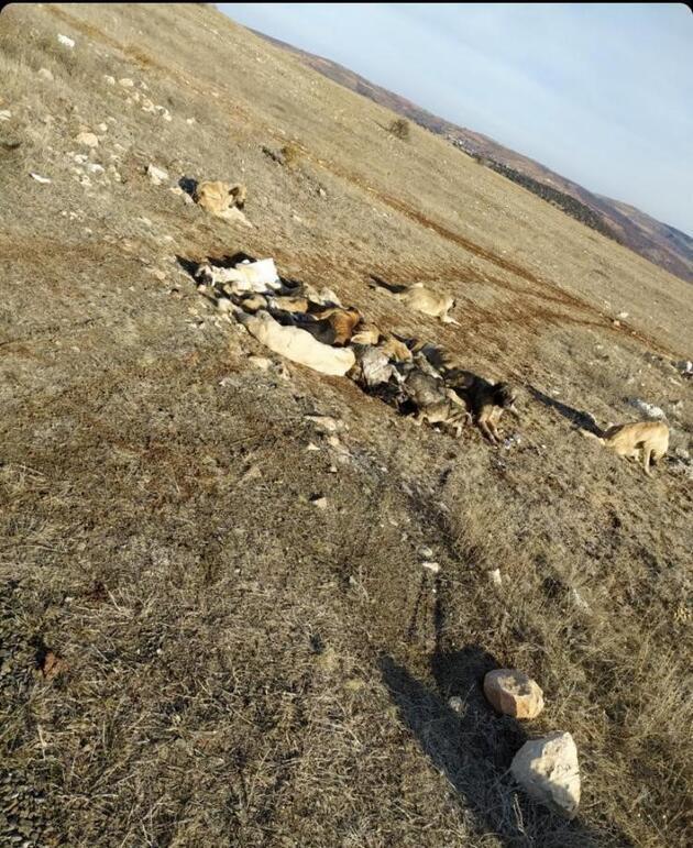 Boş arazide baygın halde bulundular! Belediye koruma altına aldı