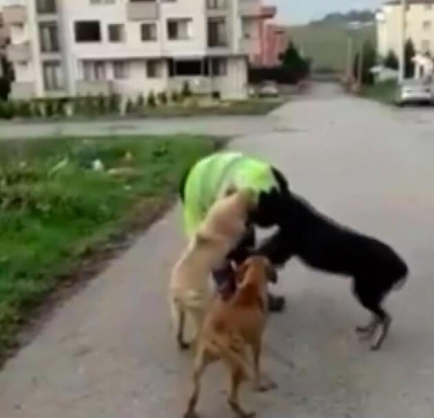 Belediye işçisinin köpeklerle oyunu yürekleri ısıttı