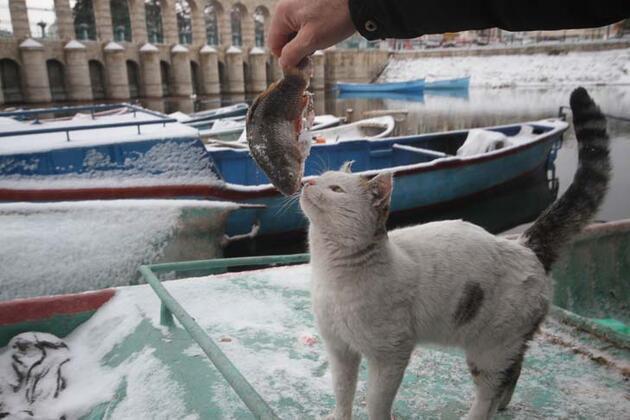 Tekneler karla doldu: Yaz kış demeden balık avı