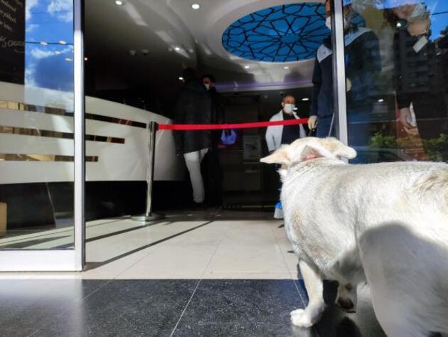 Sahibi tedavi gören köpek 5 gündür hastane kapısında bekliyor
