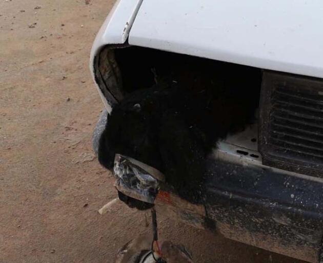 Otomobilin far bölümlerine ve yakıt deposuna gizlenmiş 4 kuzu ele geçirildi