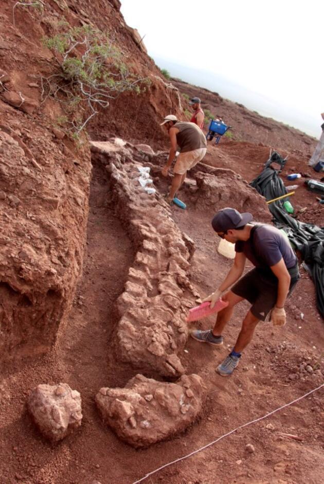 Arjantin'de 98 milyon yıllık dinozor fosili bulundu: Yeryüzündeki en büyük hayvan olabilir