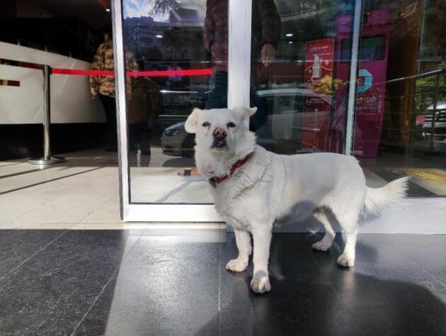 Sahibini hastane kapısında bekleyen köpek dünya basınında