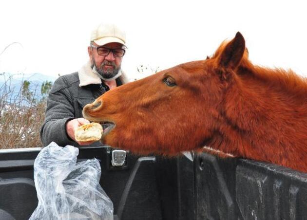 'Çocuğum' dediği yılkı atlarını 10 yıldır besliyor