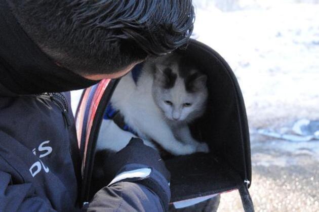 Kazadan kurtulan kediyi polis sakinleştirdi