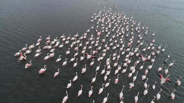 İnciraltı'ndaki flamingolar renkli görüntüler oluşturuyor