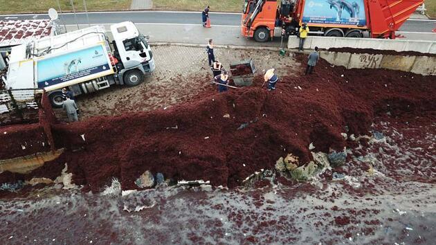 Caddebostan Sahili'ni saran kırmızı yosunlar temizleniyor