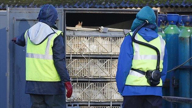İlk kez insana bulaşan türü tespit edildi: Rusya'da 'kuş gribi' alarmı
