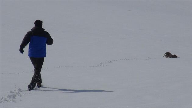 Yavru köpek annesinin olduğu köyün yolunda donmak üzereyken bulundu