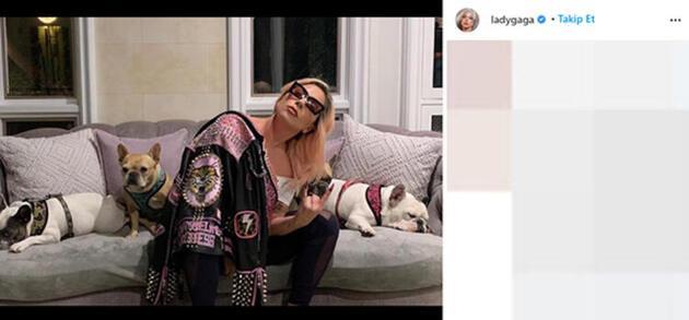 Lady Gaga'ya güzel haber! Köpekleri bulundu