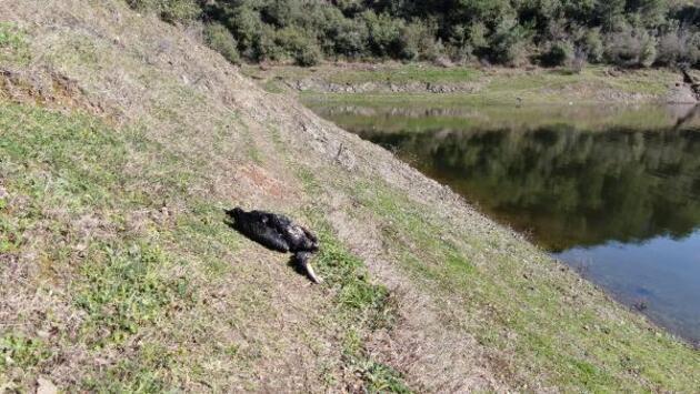 Alibeyköy Barajı'nda dikkat çeken ölü balıklar