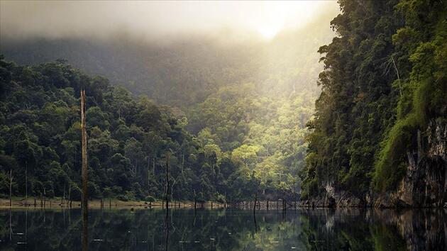 Amazon ormanlarında yerlilerin yaşadığı koruma altındaki alanlar satışa çıkarıldı