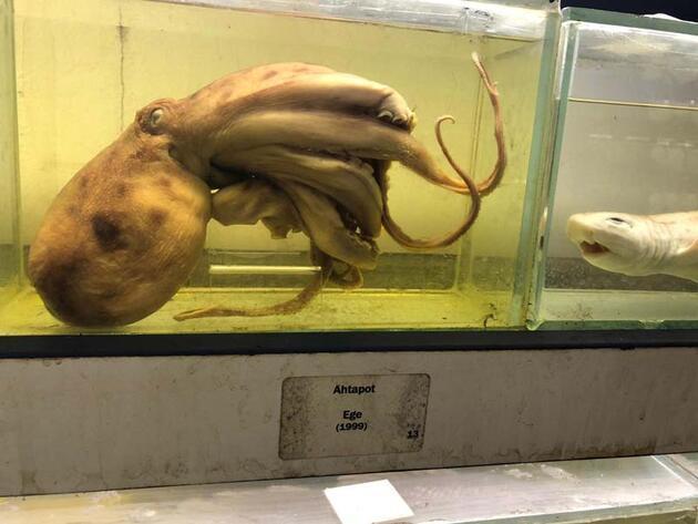 """İstanbul'un gizli kalmış """"balık müzesi""""... 52 yıl önce tutulmuş balık bile yer alıyor"""