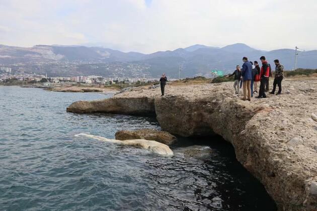 12 metre uzunluğundaki ölü balina yavrusu Hatay'da kıyıya vurdu