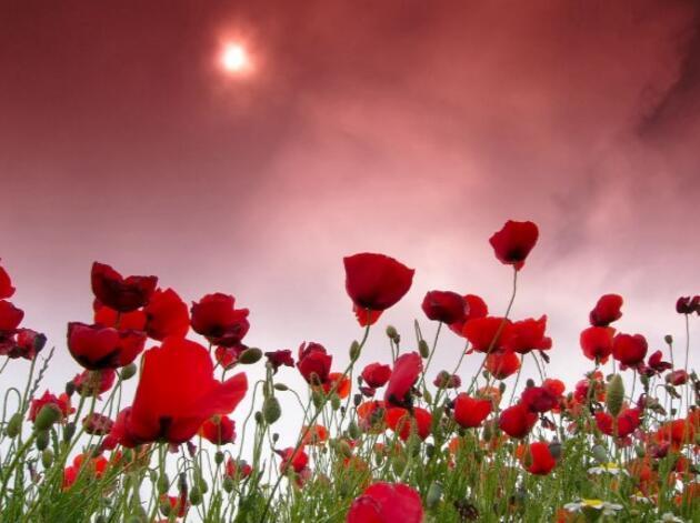 8 Mart Dünya Kadınlar Günü mesajı, görselleri... Resimli 'Dünya Kadınlar Günü kutlu olsun' sözleri sevgiliye ve anneye mesajlar