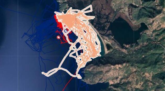 Uydu takip cihazlı 12 Caretta caretta'dan 9'u Türkiye'de kaldı