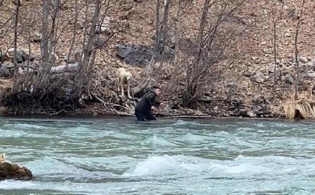 Munzur Çayı'na düşen köpeği kurtarmak için buz gibi suya girdi