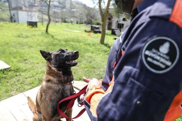 İstanbul itfaiyesi K9 merkezi kurdu... Hayat kurtaracak köpekleri yetiştiriyor