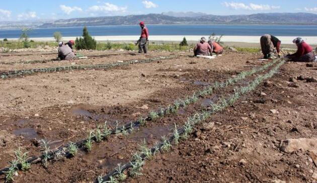 Burdur Gölü'nü 'susuz tarım' kurtaracak