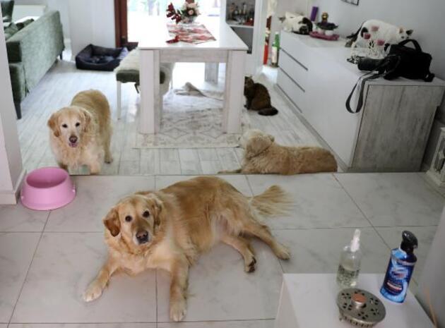 Villasında 33 kedi ve 4 köpeğe bakıyor