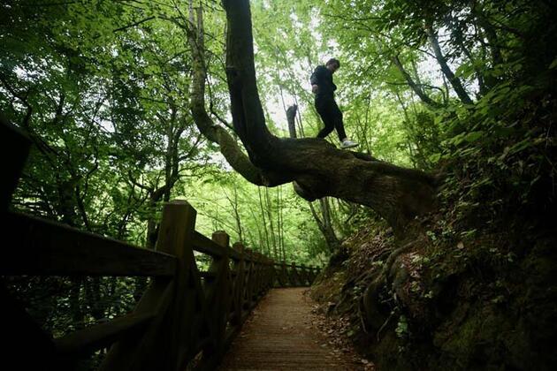Ormanın içindeki gizli cennet! Düzce'deki Aydınpınar Şelalesi pandemi sonrasına hazırlanıyor
