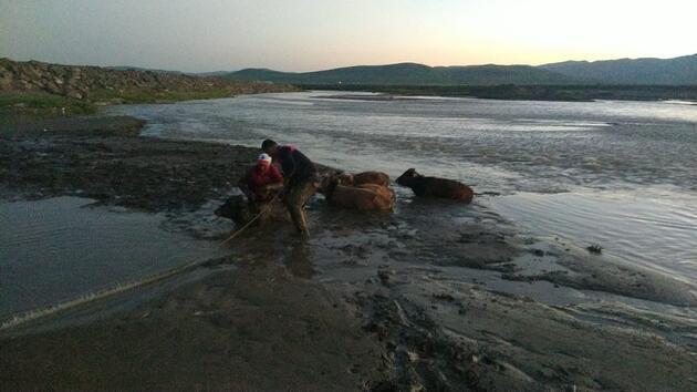 Çamura saplanan 17 inek, itfaiye ekiplerince kurtarıldı