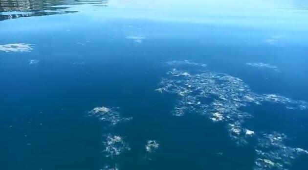 Gemlik Körfezi'ndeki deniz kirliliği temizleniyor
