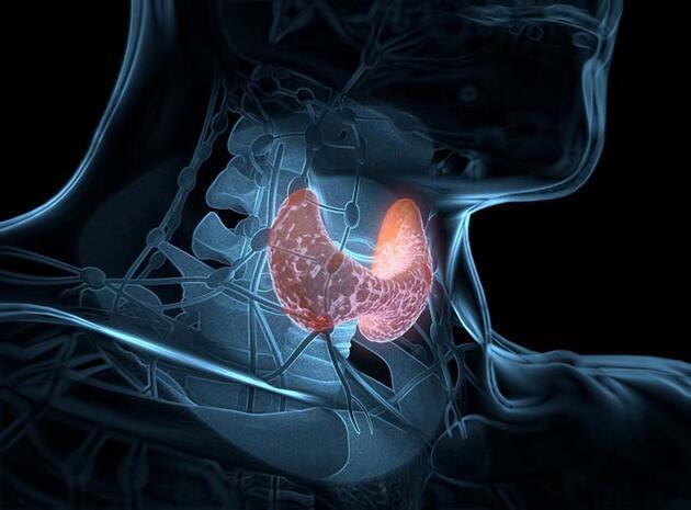 Stres tiroid hastalıklarını tetikliyor; bu meslekler risk altında