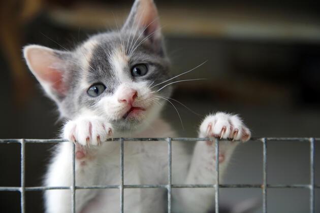 1 Temmuz'a kadar yasalaşması planlanıyor: Hayvanları Koruma Kanunu geliyor! İşte taslakta yer alan maddeler