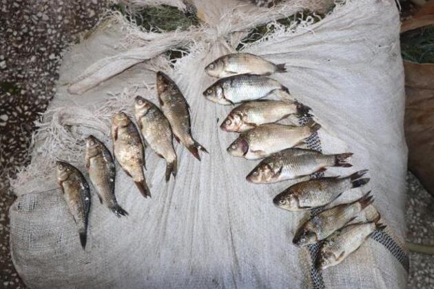 Kızılırmak Deltası'nda 26 istilacı tür keşfedildi