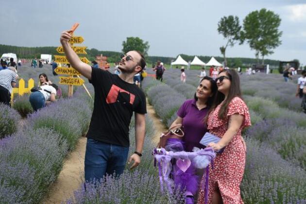 Edirne'de mor tarlalarda hasat zamanı