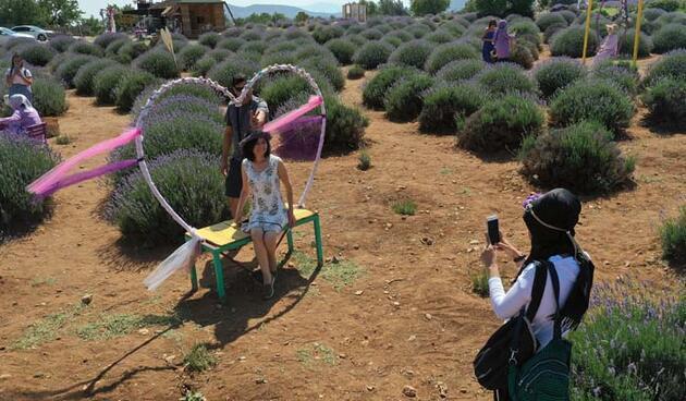 Lavanta kokulu köyde, ziyaretçi hareketliliği
