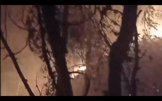 Samsun'da orman yangını! 7 hektarlık alan zarar gördü