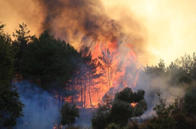 Orman yangınlarıyla mücadele sürüyor: İşte saat saat son durum