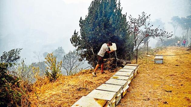Çam balı üretiminin yüzde 95'i Türkiye'deydi: Yangınlarda arı kovanları da kül oldu