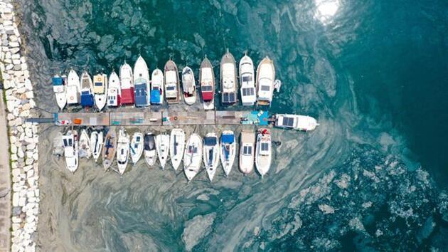 Müsilaj sonrası yeni tartışma: Marmara'dan balık yenir mi?