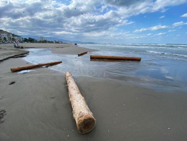 Selde sürüklenen tomruklar, Karadeniz'e yayılıyor