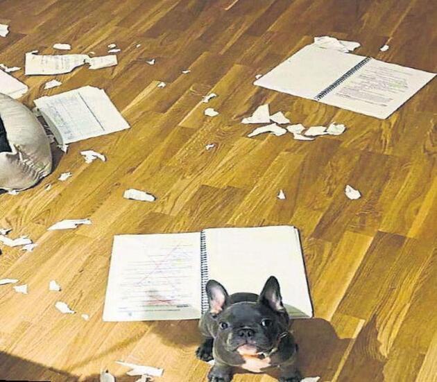 İlayda Alişan'ın köpeği, senaryoyu yedi
