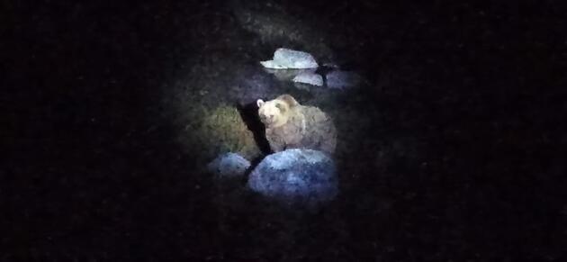 Nemrut Krater Gölü çevresinde kamp kurup, gelen ayıları da görüntülediler