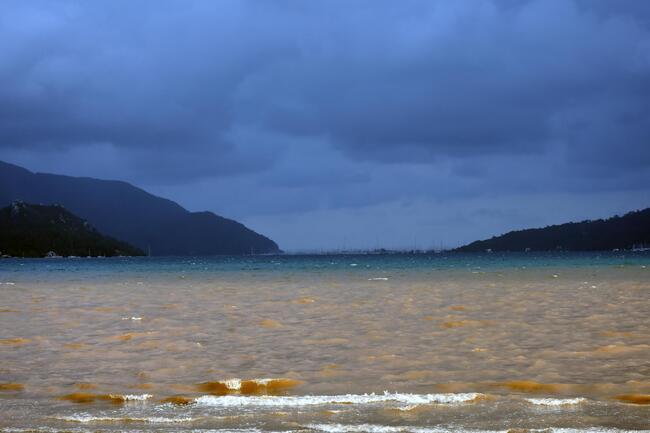 İsyan ettiren görüntü! Denizin rengi kahverengiye döndü