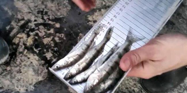 Boy limitinin altında balık avlayanlara para cezası