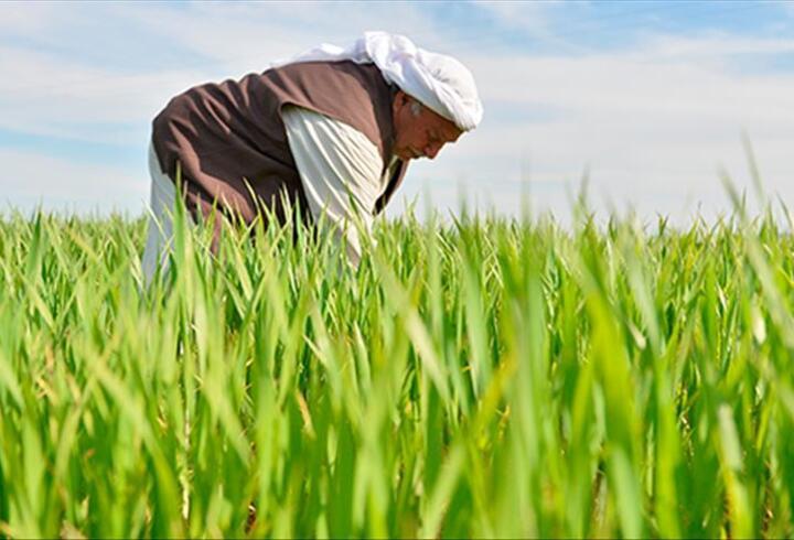 Bakan Pakdemirli'den 'Dünya Çiftçiler Günü' mesajı