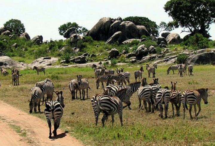 Serengeti Milli Parkı Nerede? Serengeti Milli Parkı'na Nasıl Gidilir? Serengeti Hakkında Bilinmesi Gerekenler