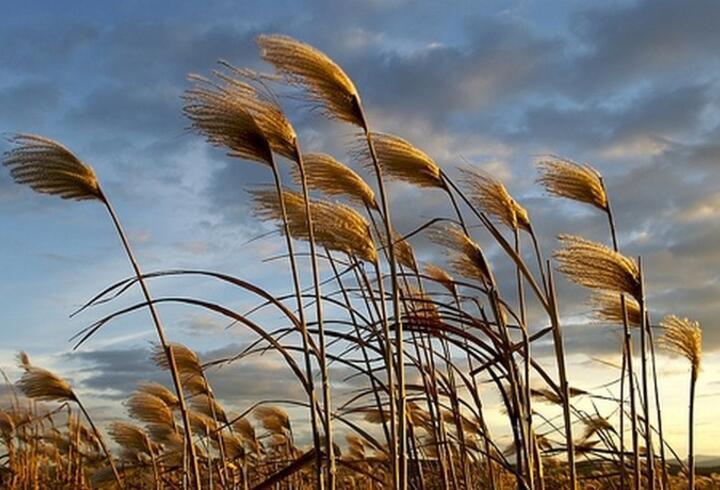Rüzgar İsimleri Nelerdir? Rüzgar Yönleri Ve Çeşitleri Nelerdir?