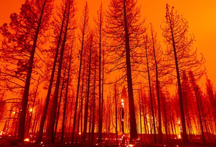 California'da 3 haftadır devam eden orman yangını tekrar büyümeye başladı