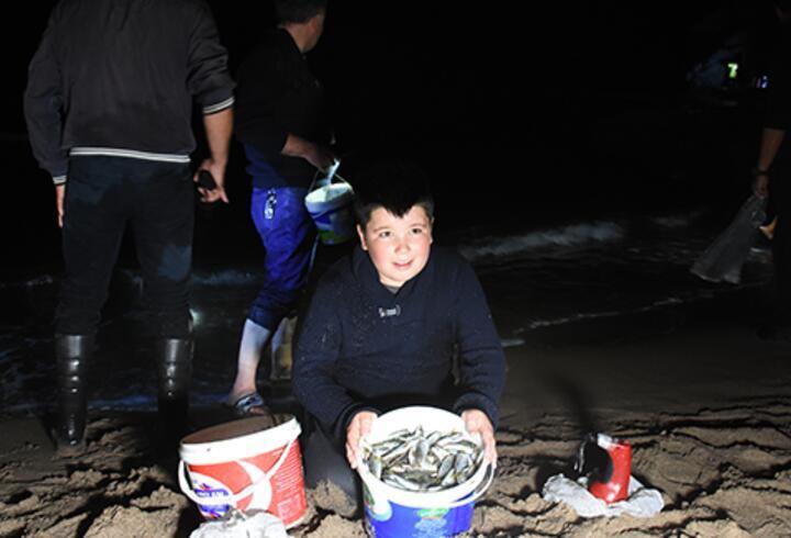 Tonlarca balık kıyıya vurdu! Eline kovayı alan sahile koştu