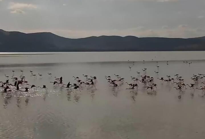 Göl yeniden su tuttu, kuşlar geri döndü
