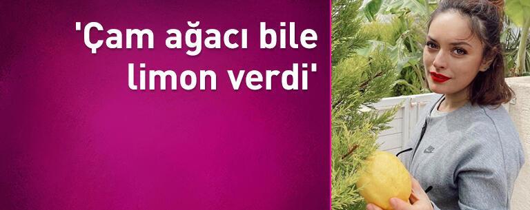 'Çam ağacı bile limon verdi'