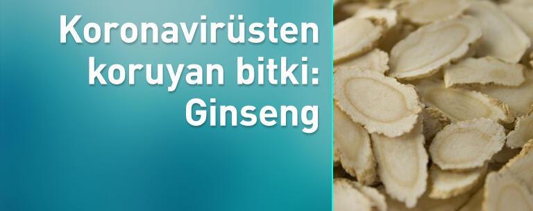 Koronavirüsten koruyan bitki: Ginseng